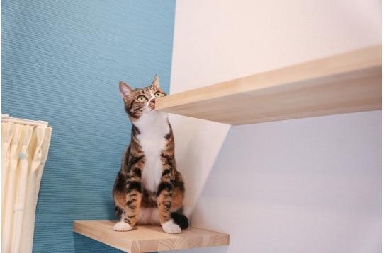猫と暮らすシェアハウス♪
