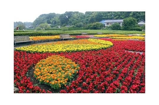 近くの大型公園!花満開
