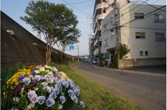 ♥ 花壇とFH二子多摩川!いい季節♪