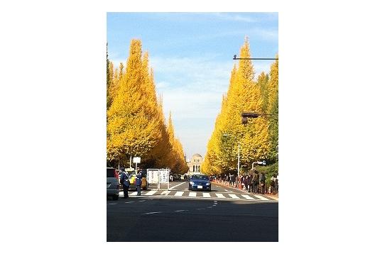 秋。外苑前イチョウ並木
