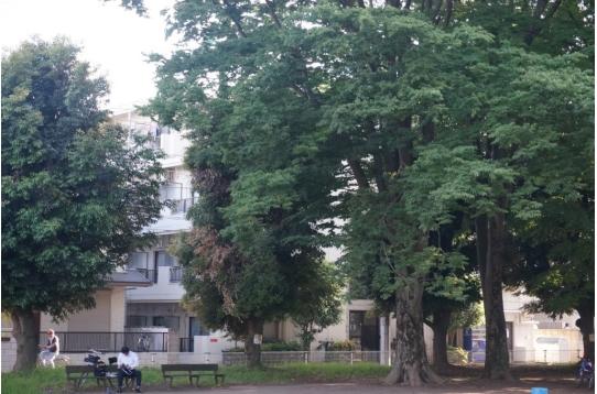 木々の向こう側は東大宮マンション