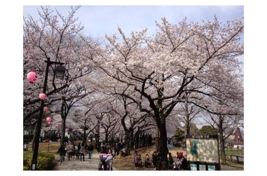 ☆春の都立浮間公園(^^)☆