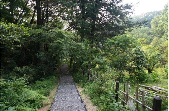 ●浄慶寺裏山 この森でアオゲラが朗らかに啼いてます