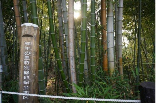 ●名称は柿生の里 休日は四季折々楽しめる散策コース