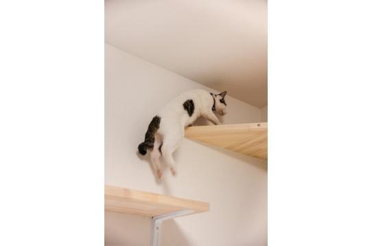 身軽に飛び乗る猫ちゃん!