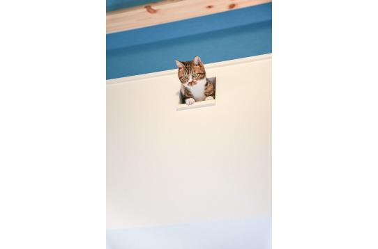 猫の小窓に癒されるそう