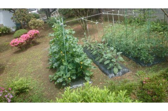 広ーい庭ではいろいろな野菜が!