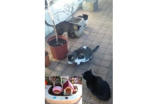 内庭に猫4匹