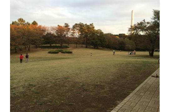 周辺の写真。光が丘公園。
