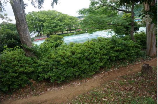 ●県立総合運動公園内、何て言っても屋外プール