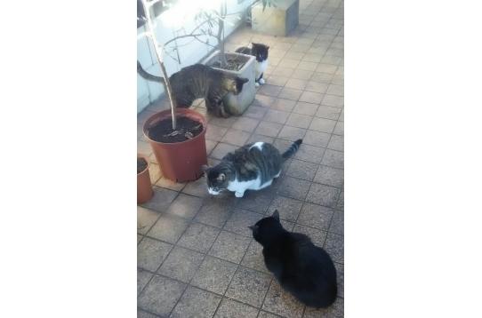 ネコと触れ合えるシェアハウス。