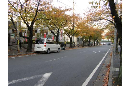 宮崎台の桜並木。毎年桜祭りはホコ天になる。