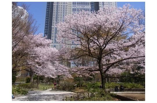 周辺環境(徒歩3分の新宿中央公園)
