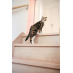 猫のための滑りにくい床材です!