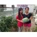 ●庭で収穫したお野菜!